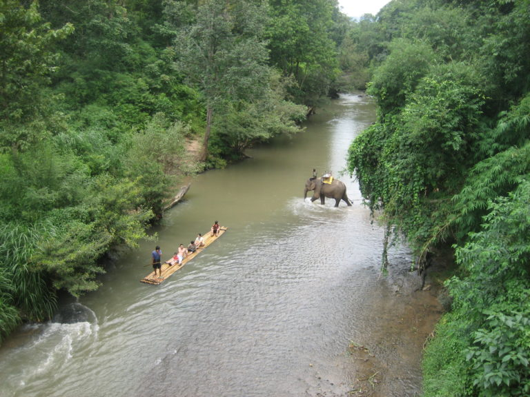 Chiang Mai Dschungel