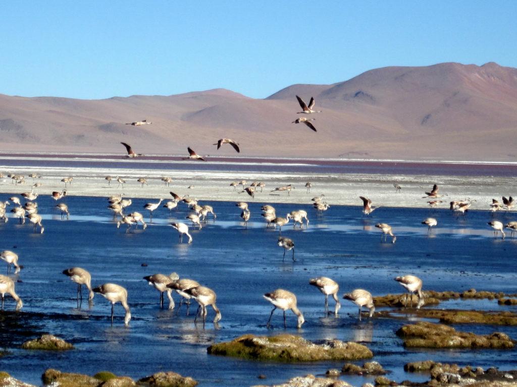 Laguna a Colorada